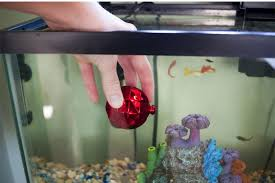 fish aquarium decorate ideas wishforpets
