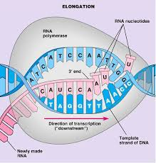 what is protein synthesis protein synthesis