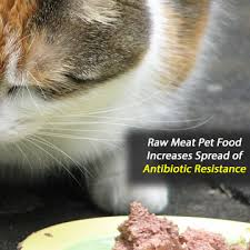 raw cat food could spread antibiotic resistant bacteria