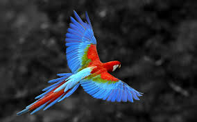 parrot symbolism a message spirit animal totems