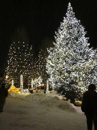 cut your own christmas tree farms near charlotte nc