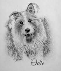 dog drawings drawings of dogs pet pictures delighted clients