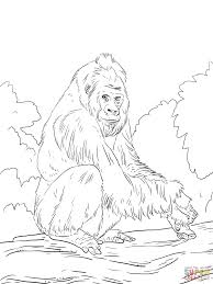western lowland gorilla coloring page free printable coloring pages