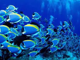 hd tropical fish wallpaper 38 widescreen fhdq wallpapers of
