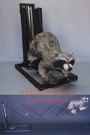 animated props attack coon animated raccoon prop dcprops