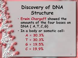 1 dna and replication 2 discovery of dna structure erwin chargaff
