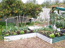 garden design garden design with growing vegetables in full sun