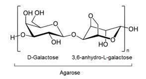 qu est ce que l agar agar en cuisine iii par quoi remplacer les œufs dans la cuisine moléculaire