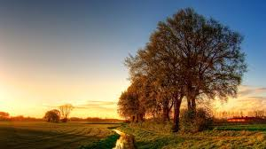 amazing nature gorgeous trees hd wallpapers free wallpapers