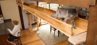 home design firms two cat centric home design firms us how to catify catster