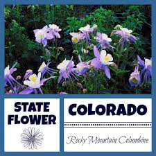 State Flower Of Colorado - colorado facts