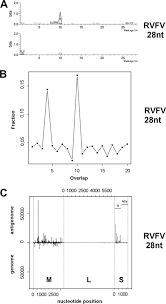 rna interference restricts rift valley fever virus in multiple