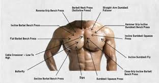 Bench Press Chest Workout The 5 Top Bodyweight Chest Exercises Fitness And Power