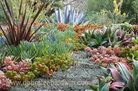 succulent gardens eclectic landscape san diego by debra