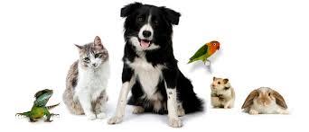 Canine Creature Comforts Creature Comforts Pet Store Durango Colorado 40 Reviews