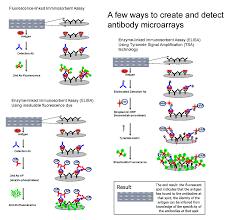 antibody microarray wikipedia
