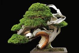 tales of tiny trees bonsai visualizer wsj