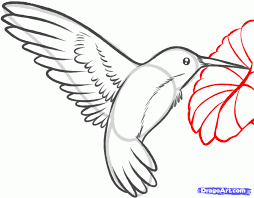 how to draw a hummingbird and flower step by step birds animals