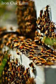 2266 best homestead animals images on pinterest backyard
