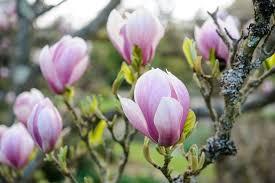 top trees for small gardens gardenersworld com