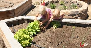 how to vegetable gardening basics healthy ideas for kids