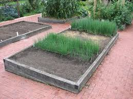 why use raised vegetable garden beds my raised vegetable garden beds