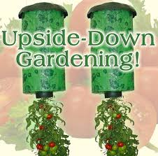 Upside Down Tomato Planter by Upside Down Tomato Planter X 2 Unbranded Your Solution For