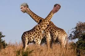 Drunk Giraffe Meme - benedict cumberbatch s long neck is your new favourite meme meme