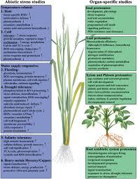 High Heat Plants Frontiers Advances In Plant Proteomics Toward Improvement Of