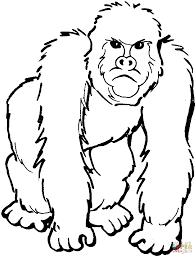 special gorilla coloring page 26 522