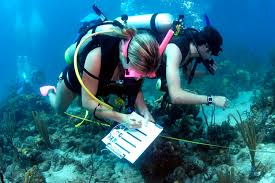 it was easy finding a career in marine biology thanks to my