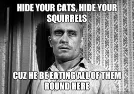 To Kill A Mockingbird Cat Meme - hide your cats hide your squirrels cuz he be eating all of them