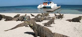 iguana island cayo iguana island day trip eat travel love global travel