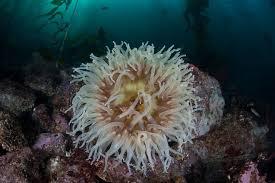 flowers of the sea photos reveal beautiful anemone