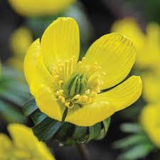 other flower bulbs u0026 tubers thompson u0026 morgan