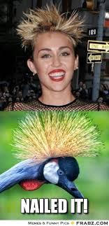 Nailed It Memes - nailed it meme 010 miley cyrus bird hair comics and memes