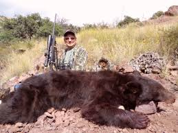 Are Bears Color Blind Arizona Guided Bear Hunts Trophy Black Bear Hunting Outfitters