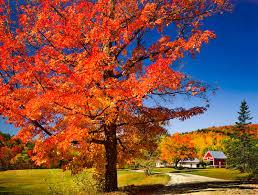 fall landscape interior design