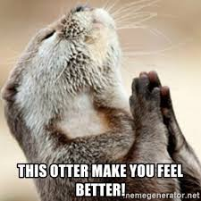 Feel Better Meme - this otter make you feel better praying otter meme generator