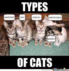 types of cats by xchris00 meme center