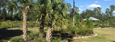florida native plants list florida native plants butterfly plants sweet bay nursery