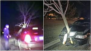 arrested for dui after driving with 15 foot tree stuck in