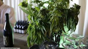 Herb Robert Pictures Getty Images California Gets Ready To Ignite Cannabis Culinary Arts