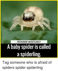 Afraid Of Spiders Meme - 25 best memes about afraid of spiders afraid of spiders memes