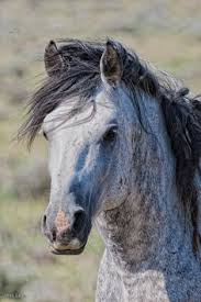 Black Horse Mustang Wild Horses Ideas 1 Pinterest Horse Pretty Horses And Animal