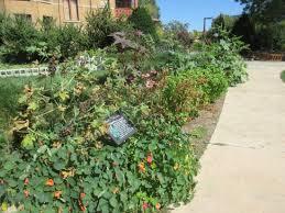 rock garden picture of allen centennial gardens madison