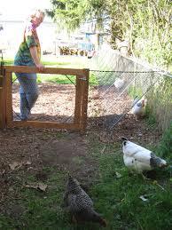 Backyard Chicken Run by This Amazing Diy Chicken Run Is What Your Backyard Needs U2014 Types