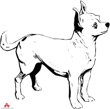 chihuahua clipart drawing pencil and in color chihuahua clipart