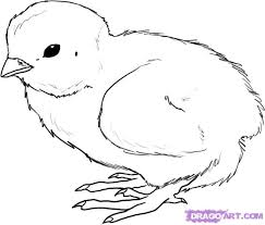 18 best chicken and bird drawings images on pinterest bird