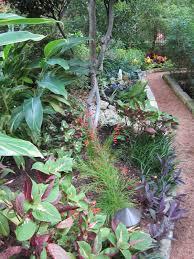 austin texas native plants shade plants for central texas lisa u0027s landscape u0026 design